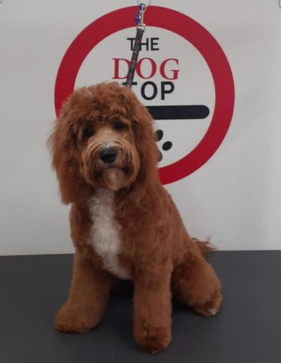 Dog Grooming Wivenhoe, Colchester