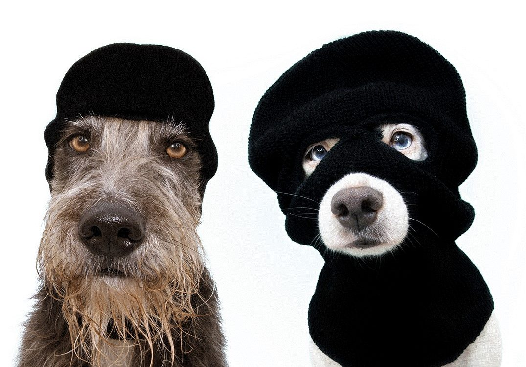 Preventing Dog Theft